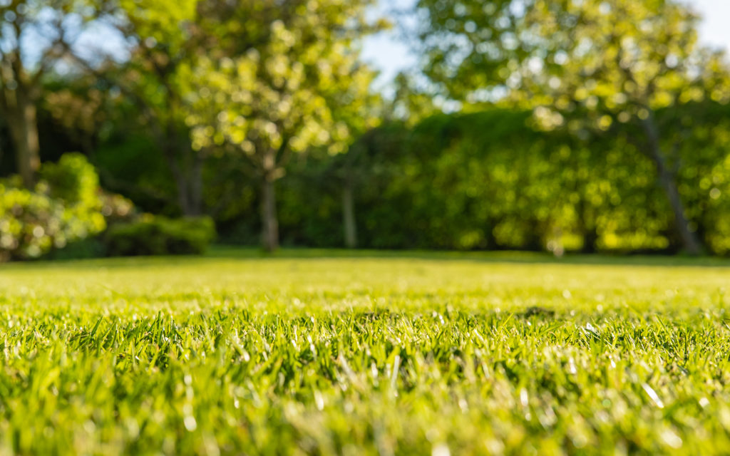 10 Great Reasons Your Lawn Care Services Should Be Done by a Pro